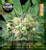 Dinafem diesel for Sale at Just Feminized Seeds Bank UK